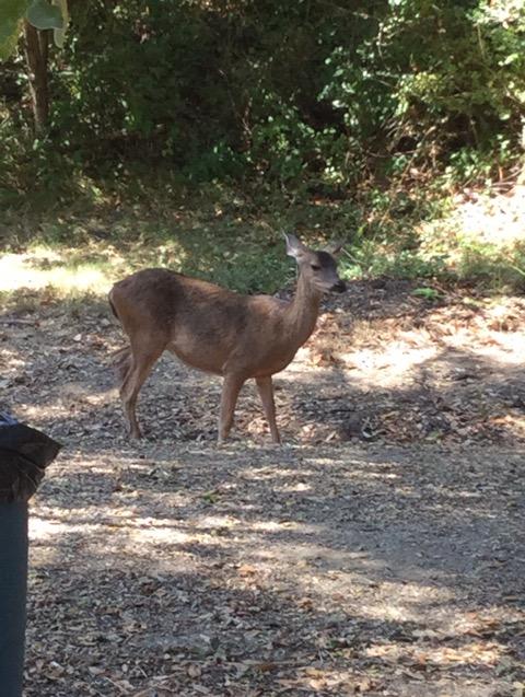 森の中に住む鹿