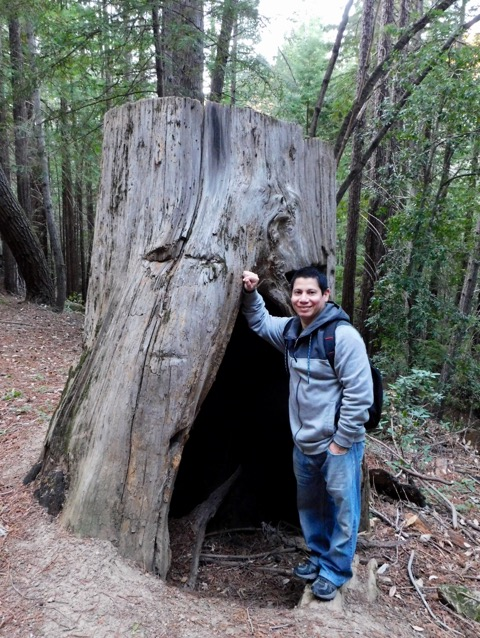 サンタクルーズの森