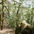 マドローネの森